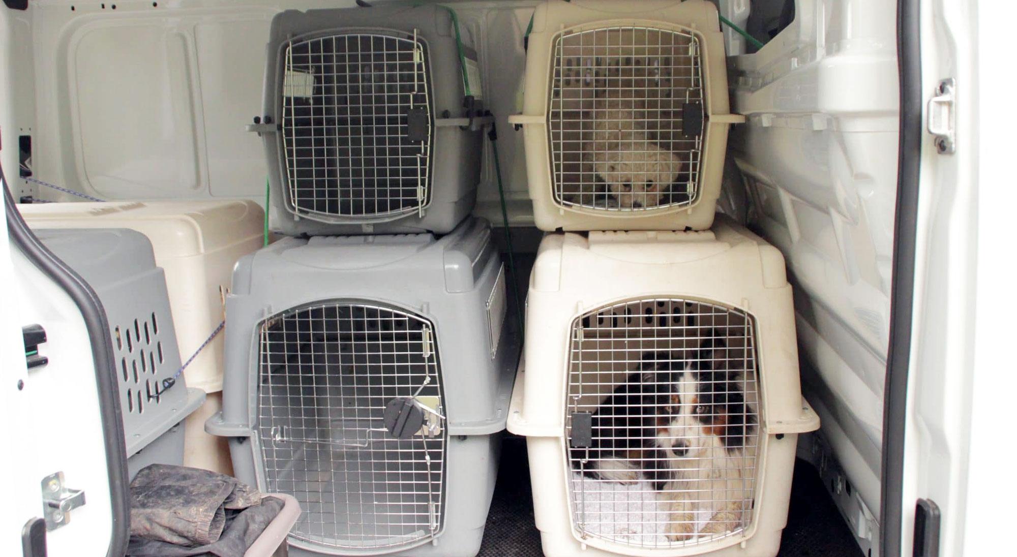 Dog Faculty - Bus Magique - Kennels de transport